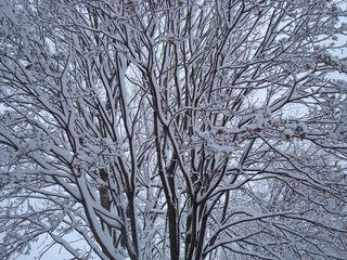 Snowday 003