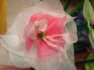 Tissue2 005
